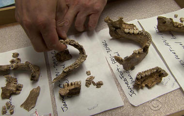 Archaeologists find human remains in Jamestown, Va.