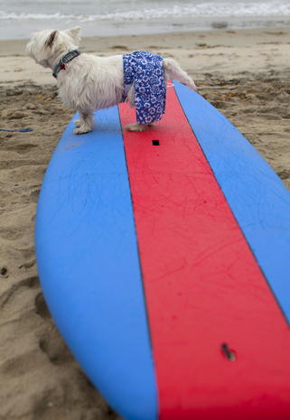 Surfin' canines