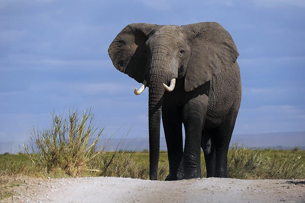 World Elephant Day: 25 wild animal facts