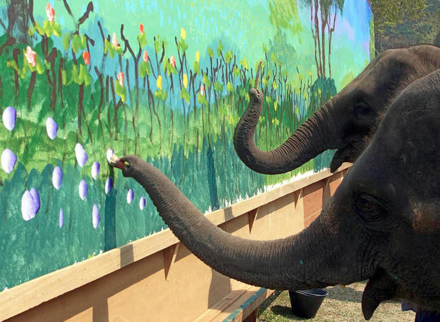 World Elephant Day: 25 wild animal facts
