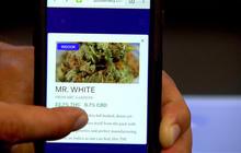 Apps deliver pot on demand