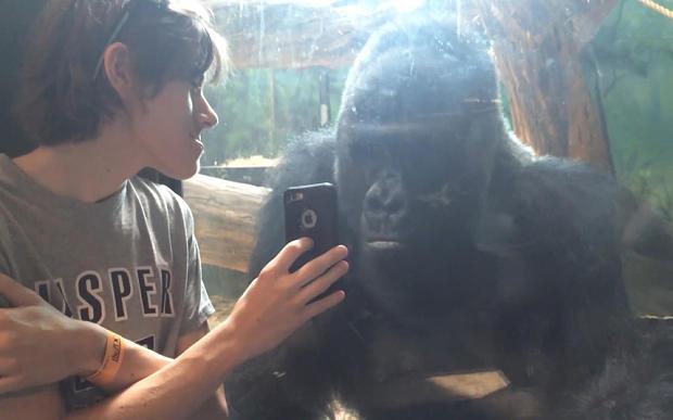 gorillaphotos2.jpg