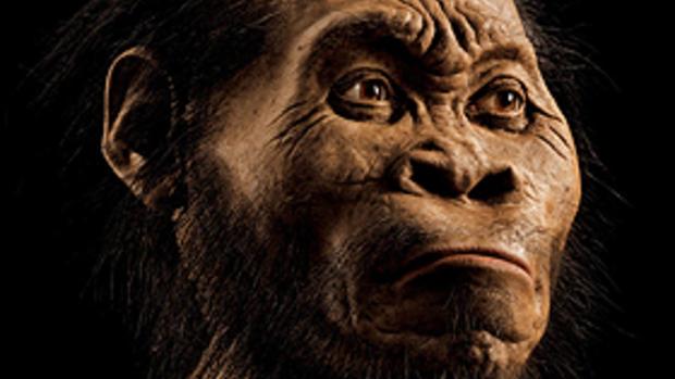 """Almost human"" - Homo naledi"