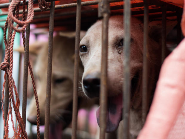 A dog looks out from its cage at a stall during a dog meat festival at a market in Yulin in southern China's Guangxi province June 22, 2015.