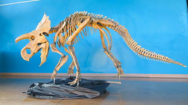 ava-dinosaur.jpg
