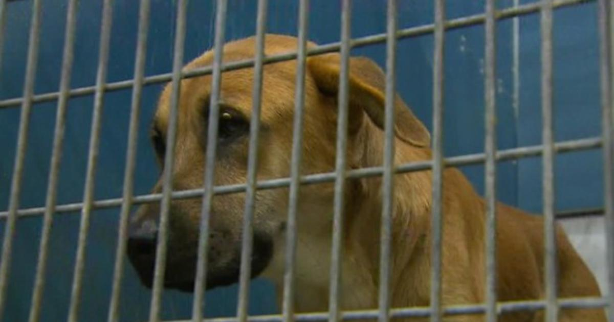 Animal cruelty law: Bill being re-introduced to make animal