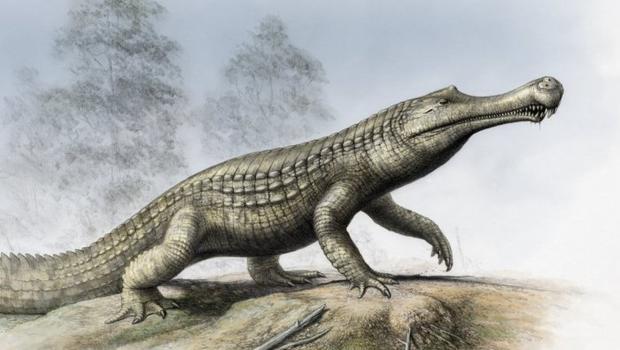Image result for paleocene crocodile