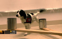 Dogs trained to detect ovarian cancer have 90 percent accuracy rate