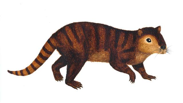 reconstruction-of-kimbetopsalis-simmonsae-credit-sarah-shelley.jpg