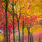 fall-foliage-ap789763434558.jpg
