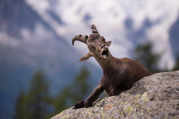 Hilarious winners of the 2015 Comedy Wildlife Photography Awards
