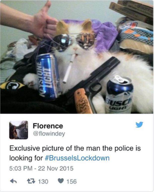 BrusselsLockdownCats17