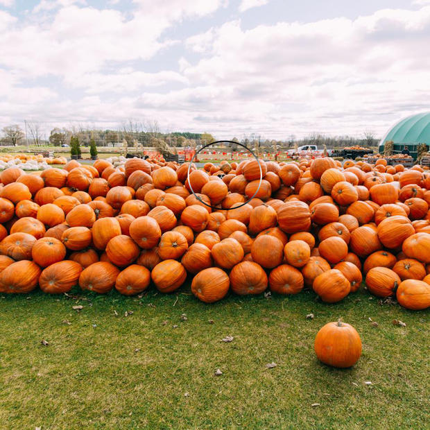 findmomopumpkin-circle.jpg