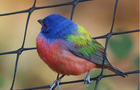 colorfulbird1.png