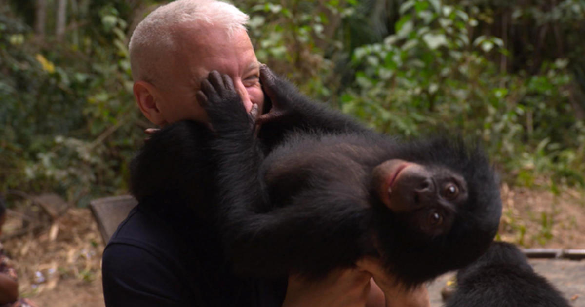 Bonobo chimpanzee porn girls xxxx