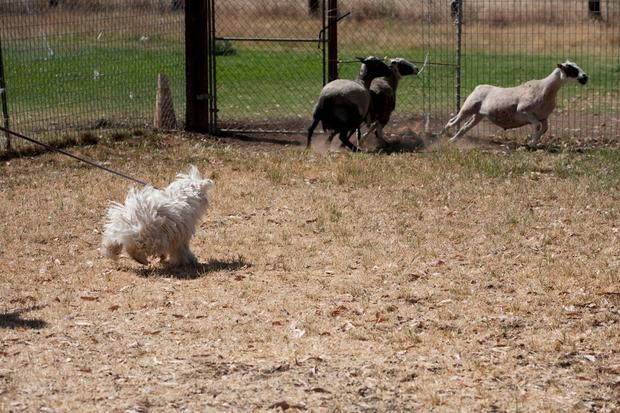 beast-sheep.jpg
