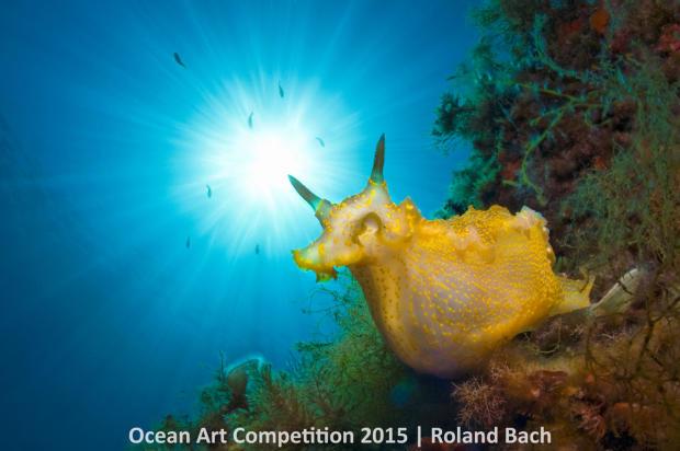 1st-n-ocean-art-2015-roland-bach-1200.jpg