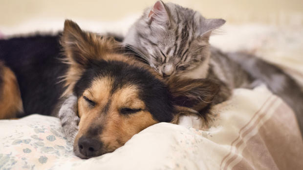 10 scary diseases pets give people