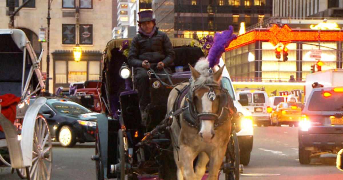 new york citys horse drawn carriages should they We would highly recommend nyc horse carriages to anyone visiting the city our tour with karl and rudy was so enjoyable karl is so personable and knowledgeable about the park and surrounding area.