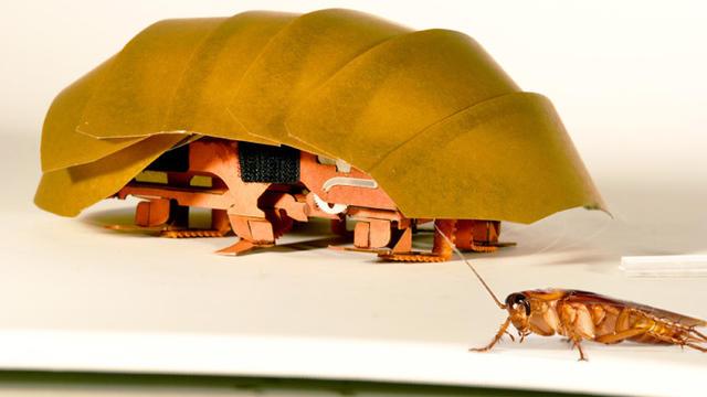 cockroach robot.jpg
