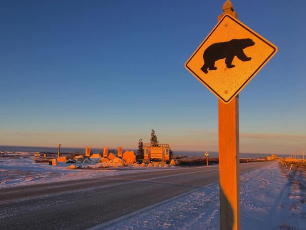 churchill-manitoba-polar-bear-capital-dustin-stephens-img9973.jpg