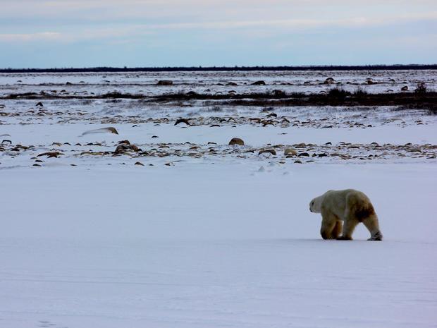 churchill-manitoba-polar-bear-capital-dustin-stephens-img1968.jpg