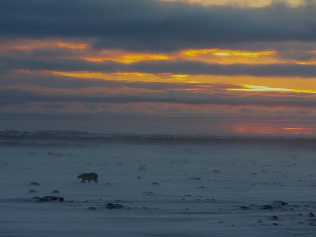 churchill-manitoba-polar-bear-capital-dustin-stephens-img1643.jpg