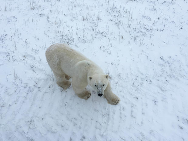 churchill-manitoba-polar-bear-capital-dustin-stephens-img9784.jpg
