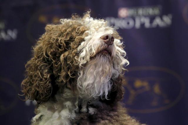 Westminster Kennel Club Dog Show - Westminster Dog Show