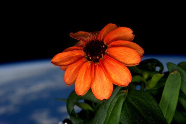 Year-in-space-cy8d84sumaat-6c.jpg