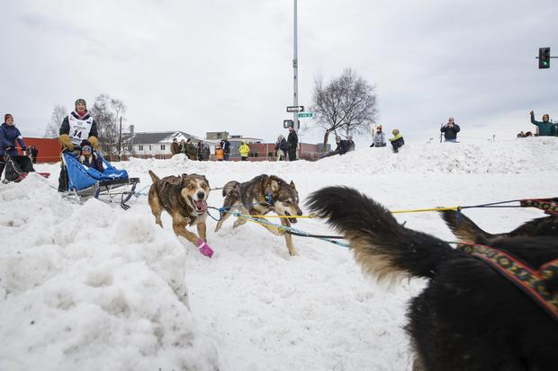 "Alaska's Iditarod: ""The last great race"""