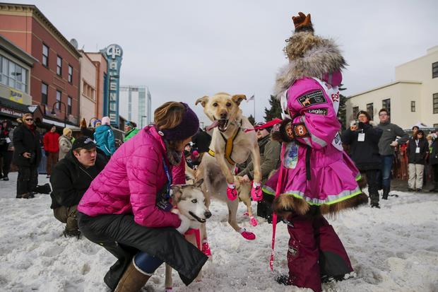 Iditarod dog-sled race-2016-03-06t021057z1065724406gf10000335145rtrmadp3usa-iditarod.jpg
