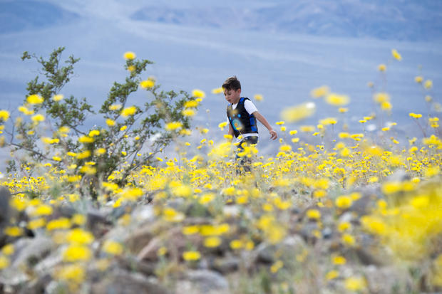 Death Valley's rare carpet of gold