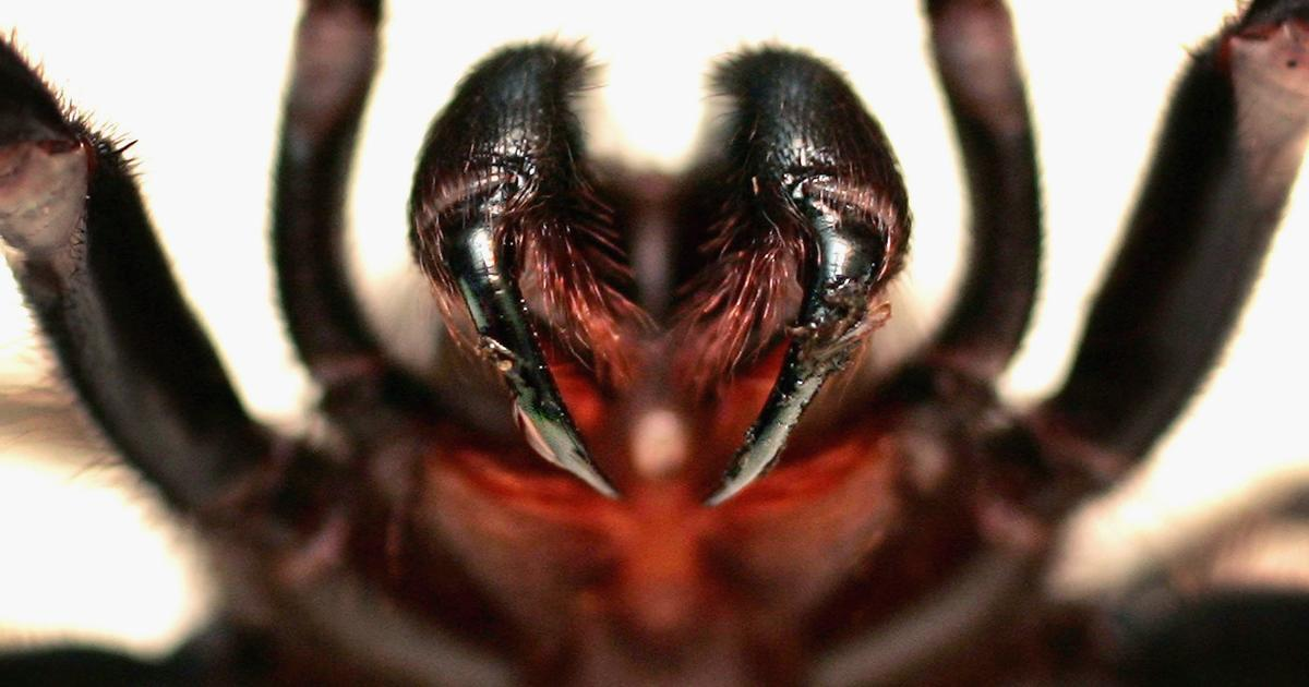 8 Hairy Mystery Spider The Worlds Most Dangerous Spiders