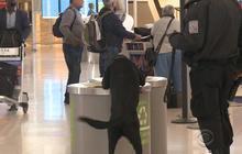 TSA to ramp up random searches at airports