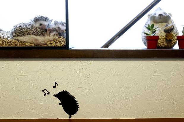 The hedgehog cafe