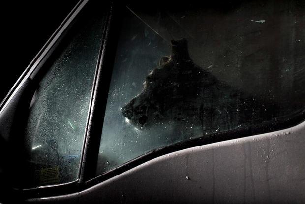 dogs-in-cars-buzz-by-martin-usborne.jpg