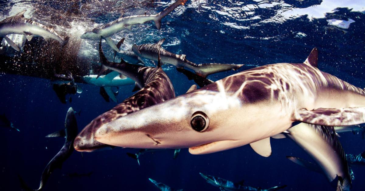 endangered animals of the ocean essay