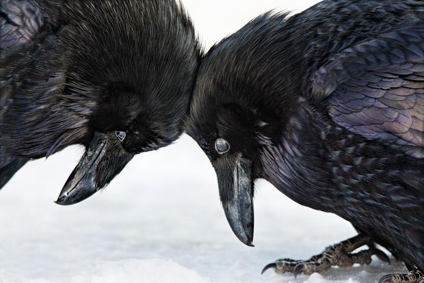 The 2016 Audubon Photography Awards