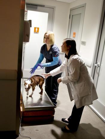 CSI vets battle pet abuse
