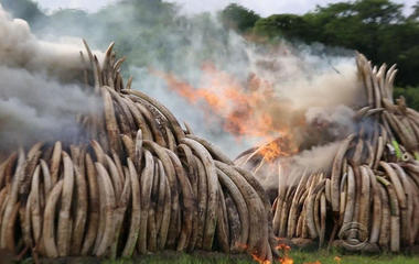 Massive bonfire in Kenya a stand against ivory poaching