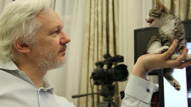 Julian Assange and his kitten