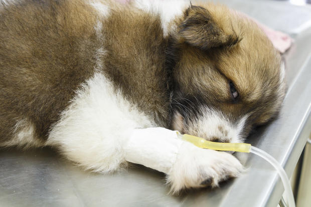 The 7 foods most likely to make your pet sick
