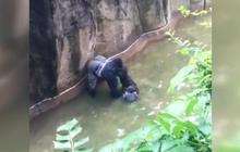 Cops investigate gorilla incident at Cincinnati Zoo