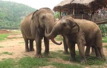 "Thailand's ""elephant whisperer"" devoted to saving endangered species"
