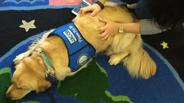 therapy-dog-1.jpg