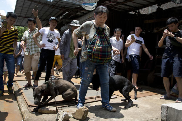 Dog meat eating festival