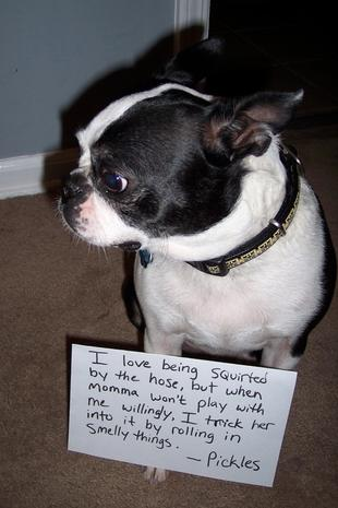 Hilarious dog shaming