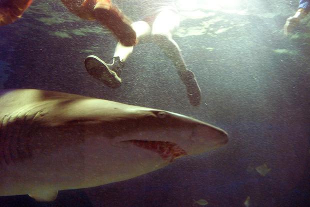 Teen's dad fights off shark - Shark attacks (WARNING
