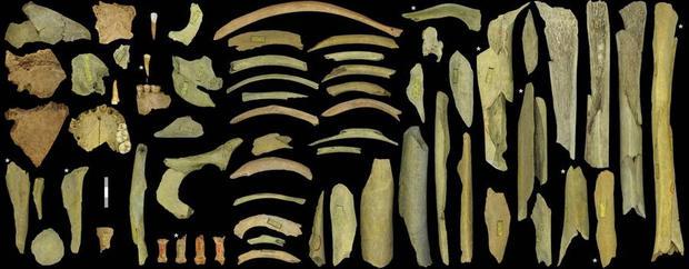 neanderthal-bones-full-width.jpg